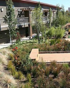 commercial property and HOA landscape enhancement services