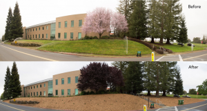 SLAC lawn replacement before after Stanford CA