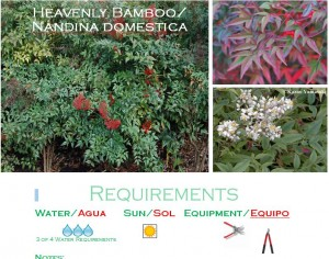 Nandina Domestica low water usage plants