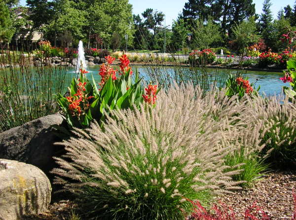 landscape enhancement water management cupertino