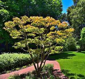 Silicon Valley estate landscaping services