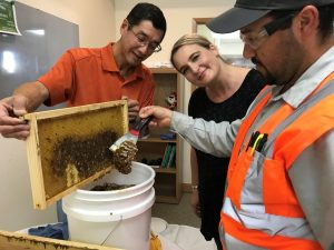 collecting natural honey