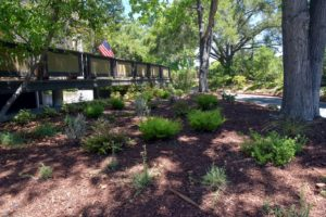 Oak Creek Drought tolerant