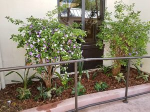 new plantings at Ronald McDonald House in Stanford, CA
