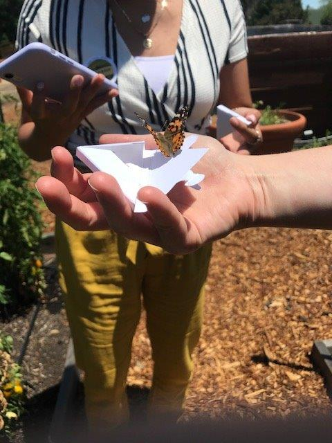release of ladybugs and butterflies at Gachina Farm